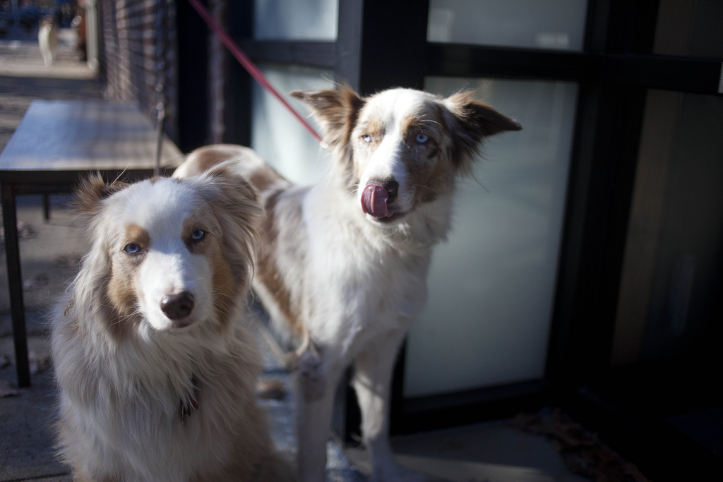 Williamsburg: Beautiful dogs